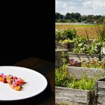 amass-sustainable-organic-restaurant-kitchen-education-program