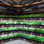 Albert-Heijn-supermarket-pick-your-own-herb-garden