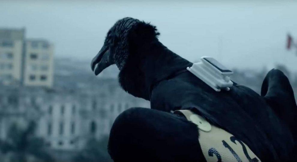 vulturewarn-garbage-animal-bird-data-location.jpg