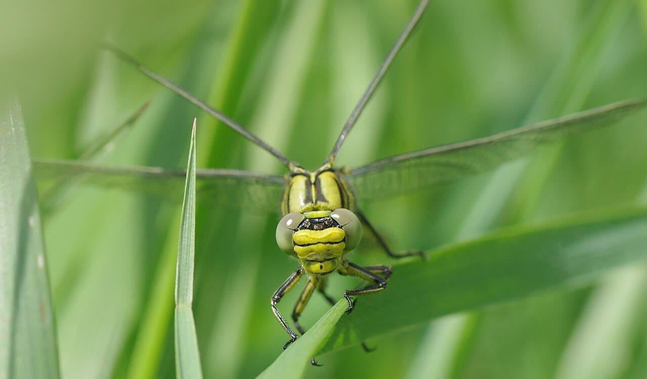 Innovation startup le dragonfly sight pourrait - Isolation gratuite gouvernement ...